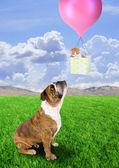 Bull dog and kitten in basket — Stock Photo