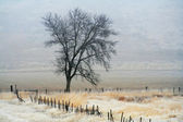 Tree in a pasture — Stock Photo