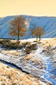 Few trees in winter — Stock Photo