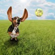 Basset hound chasing tennis ball — Stock Photo #53608725