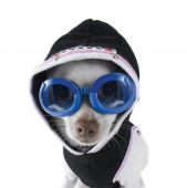 Chihuahua with goggles and hoodie on — Photo