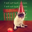 Pug wearing a dunce hat — Stock Photo #53618713