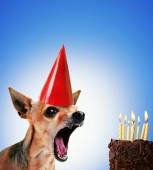 Chihuahua blowing out candles on cake — Stock Photo