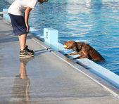 Dog at local pool — Stock Photo
