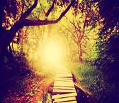 Magiczny most zielony bujnego lasu — Zdjęcie stockowe