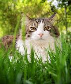 Pretty cat in long grass — 图库照片