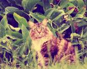 Cat sitting in long grass — Stock Photo
