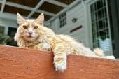 Cat lounging on a porch — 图库照片