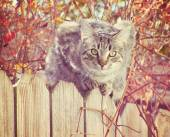 Grey cat on a fence — Stock Photo