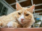 Cat lounging on a porch — Stock Photo