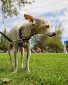 Dog at local park — Stock Photo
