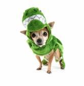 Chihuahua dressed up as dinosaur — Stockfoto