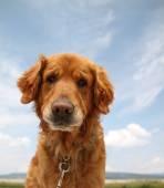 Hond genieten van buitenleven — Stockfoto