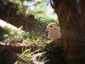 Cute dove in a nest — Foto Stock