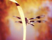 Small dragonfly — Stock Photo