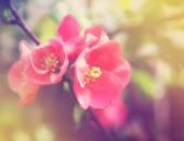 粉红色鲜花盛开 — 图库照片
