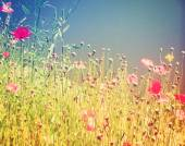 Field of wildflowers — Stock Photo