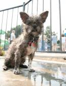 Mutt at public pool — Stock Photo