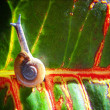 Snail on colorful leaf done — Stock Photo #53628665
