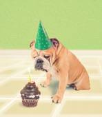 Bulldog looking at birthday cake — Stockfoto