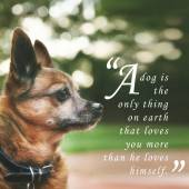 Chihuahua mix senior dog — 图库照片