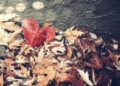 Paper heart in pile of leaves — Stock Photo