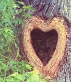 Heart shaped hollow hole in tree trunk — Zdjęcie stockowe