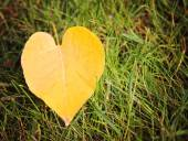 Single fallen leaf on ground — Stock Photo