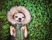 Cute dog on grass — Stock Photo
