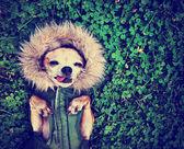 Cute dog on grass — Zdjęcie stockowe