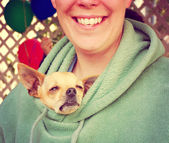 Chihuahua poking head out of person's jacket — Stock Photo