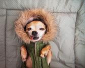 Cute dog on blanket — Stock Photo