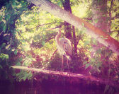 Heron in marshy park pond — Stock Photo