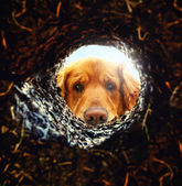 Dog looking down hole in ground — Stockfoto