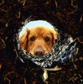 Dog looking down hole in ground — Foto Stock