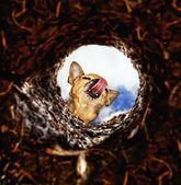 Dog peeking into dirt hole in ground — Stock Photo