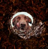 Dog peeking into hole in ground — Stock Photo