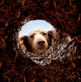 Dog peeking into hole in ground — Stockfoto