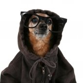 Chihuahua wearing hoodie and glasses — Stock Photo