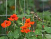 Hummingbird in front of garden — Stockfoto