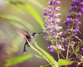 Cute hummingbird hovering at flower — Stock Photo