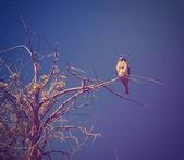 Kestrel sitting on branch — Stock Photo
