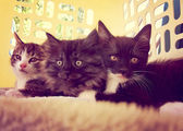 Three kittens in laundry basket — Stock Photo