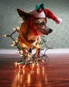 Santa's little helper — Stock Photo