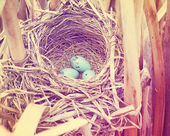 Three blue eggs in nest — Stok fotoğraf