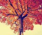 Feet resting on tree trunk — Stock Photo