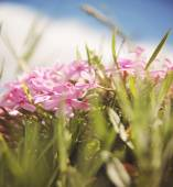 Bunch of pink wild flowers — Stock Photo
