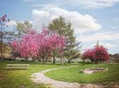 Park with path and bench — Stock Photo