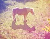 Pretty pony in a field — Stock Photo