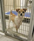 Dog in an animal shelter — Stock Photo
